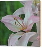 Pale Stargazer Lillies I 2010 Wood Print