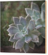 Pale Succulent On Artistic Background, Macro Wood Print