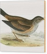 Pale Thrush Wood Print