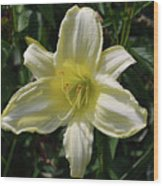 Pale Yellow Flowering Lily Blossom In A Garden Wood Print