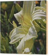 Pale Yellow Lily In A Garden Of Daylilies Wood Print