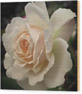 Pale Yellow Rose After The Rain - Glow Wood Print