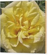 Pale Yellow Rose Wood Print