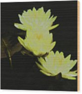 Pale Yellow Water Lilies Wood Print