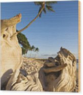 Palm And Driftwood Wood Print