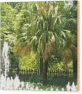 Palm And Fountain Wood Print