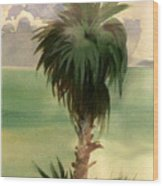 Palm At Horseshoe Cove Wood Print