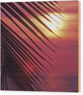 Palm At Sunset Wood Print