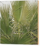 Palm Bush Wood Print