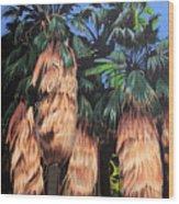 Palm Canyon Entrance Wood Print