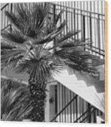 Palm Chevron Palm Springs Wood Print