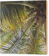 Palm Collection - Coconuts Are Fine Wood Print