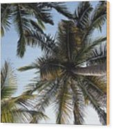 Palm Collection - Standing Tall Wood Print