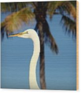 Palm Egret Wood Print