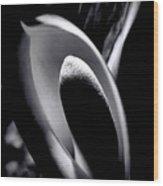 Palm Flower Wood Print