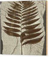 Palm Fossil Sandstone  Wood Print