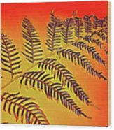 Palm Frond In The Summer Heat Wood Print