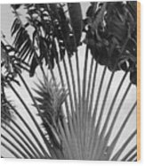 Palm Frons Wood Print