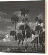 Palm Group In Florida Bw Wood Print