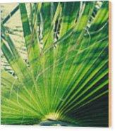 Palm House Branch Wood Print