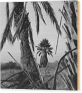 Palm In View Bw Horizontal Wood Print