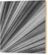 Palm Leaf Texture Wood Print