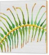 Palm Leaf Watercolor Wood Print
