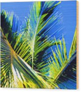 Palm Leaves Against The Sky 3 Ae  Wood Print