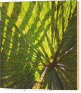 Palm Leaves And Morning Light Wood Print