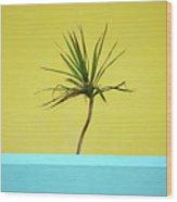 Palm On Porch Wood Print