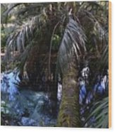 Palm Over A Boil Wood Print
