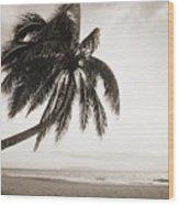 Palm Over Beach Wood Print