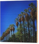 Palm Row Wood Print