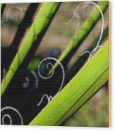 Palm Strings Wood Print