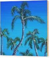 Palm Tops Wood Print
