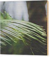Palm Tree 5 Wood Print
