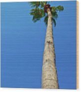 Palm Tree Against Blue Sky Wood Print