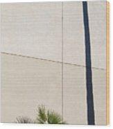 Palm Tree And Shadows Wood Print