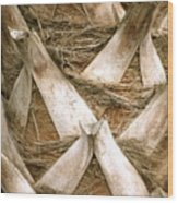 Palm Tree Bark Wood Print
