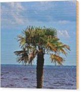 Palm Tree By The Lake Wood Print
