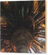 Palm Tree Canopy 0558 Wood Print