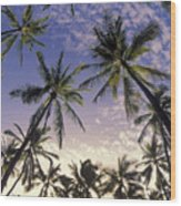 Palm Tree Grove Wood Print