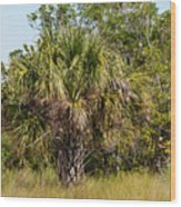Palm Tree In Golden Grass Wood Print