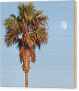 Palm Tree In Huntington Beach Wood Print
