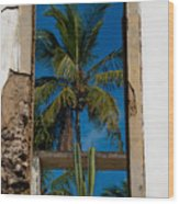 Palm Tree In The Window Wood Print