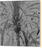 Palm Tree Wood Print