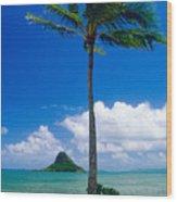 Palm Tree On The Beach Kaneohe Bay Oahu Hawaii Wood Print