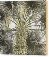Palm Tree Pen And Ink Grayscale With Sepia Tones Wood Print