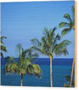 Palm Tree Tops Wood Print