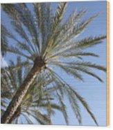 Palm Trees 2 Wood Print